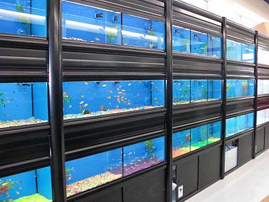 fish-aquatic