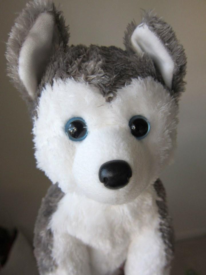 Havinko the dog